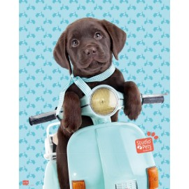 Mini Poster Studio Pets Dog Scooter