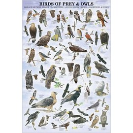 POSTER HOBBY  BIRDS OF PREY AND OWLS
