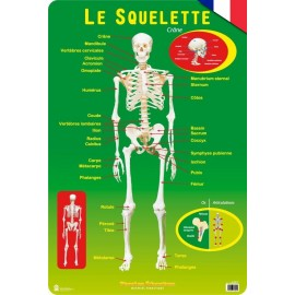 Educational Poster Francia Le Squelette Humain
